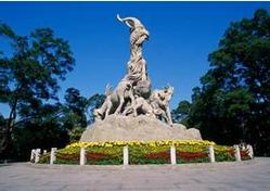 中国哪个省的魔方氛围最活跃?